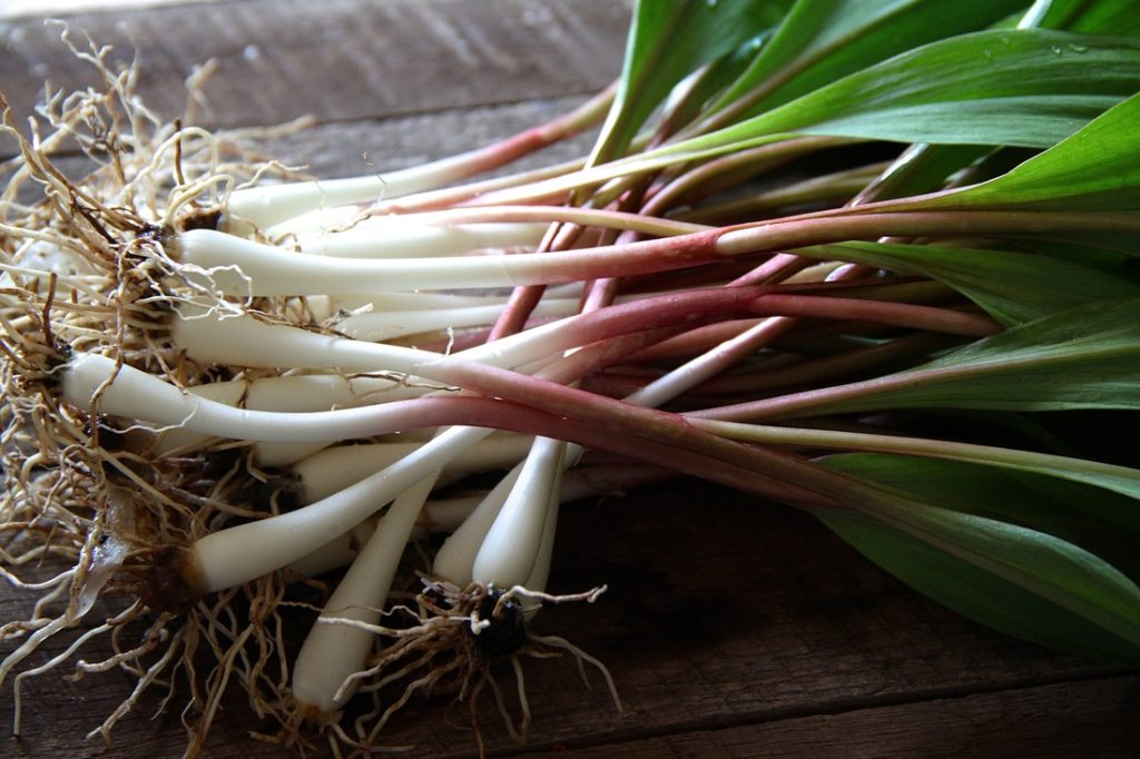 ramps almost ready to cook - wild ramps